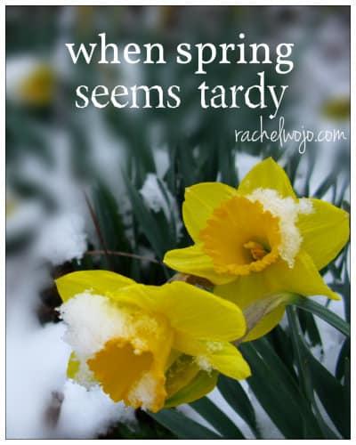 spring snow late