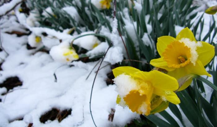 When Spring Seems Tardy & Whimsical Wednesday Blogger Linkup