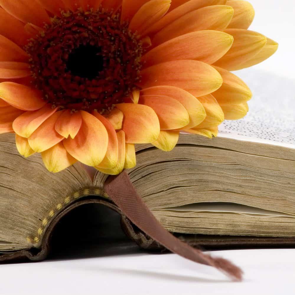 5 Ways to Choose Verses for Bible Journaling