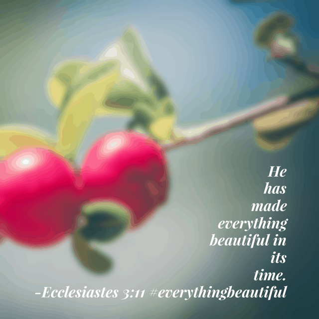 Whatever is in God's timing is beautiful. But why do we have a hard time seeing the beauty in the midst of our situations and circumstances? This month , our 31 day #biblereadingplan focuses on #everythingbeautiful . Can't wait to learn more about savoring the current season and seeing God's elegance! #biblereading
