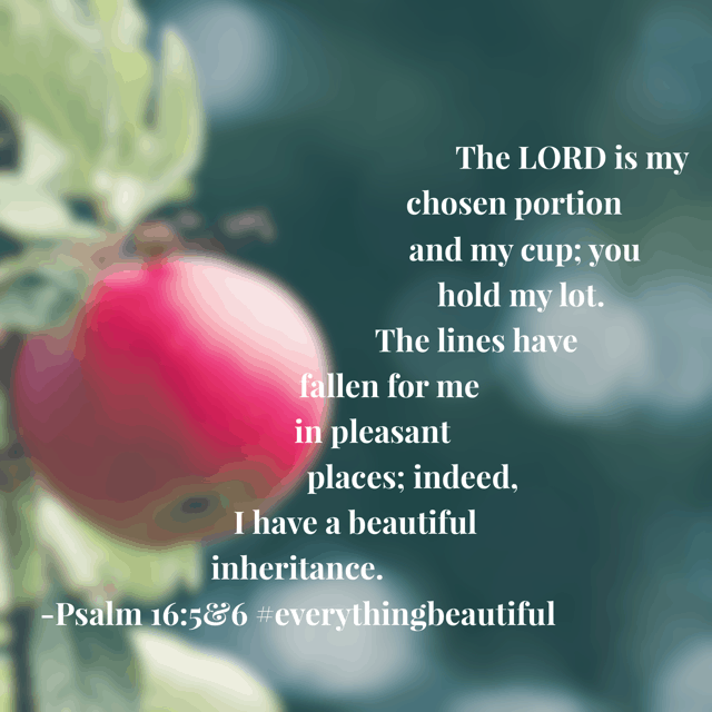 When the dreariness of life weighs on my heart and blurs my ability to see beauty all around, today's #everythingbeautiful #biblereadingplan reminds me that I have a beautiful inheritance. My Father owns the cattle on a thousand hills. The gift of salvation reveals beauty in each and every day if I choose to see it! What's your choice today? Happy Wednesday! #biblereading