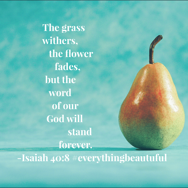The search for beauty can seem long and hard. It's easy to think we've discovered it, only to realize that it is very temporary. But the beauty of God's Word? It lasts forever. Have a terrific Thursday; I pray your time in the Word today is gorgeous!! #everythingbeautiful #biblereadingplan #biblereading