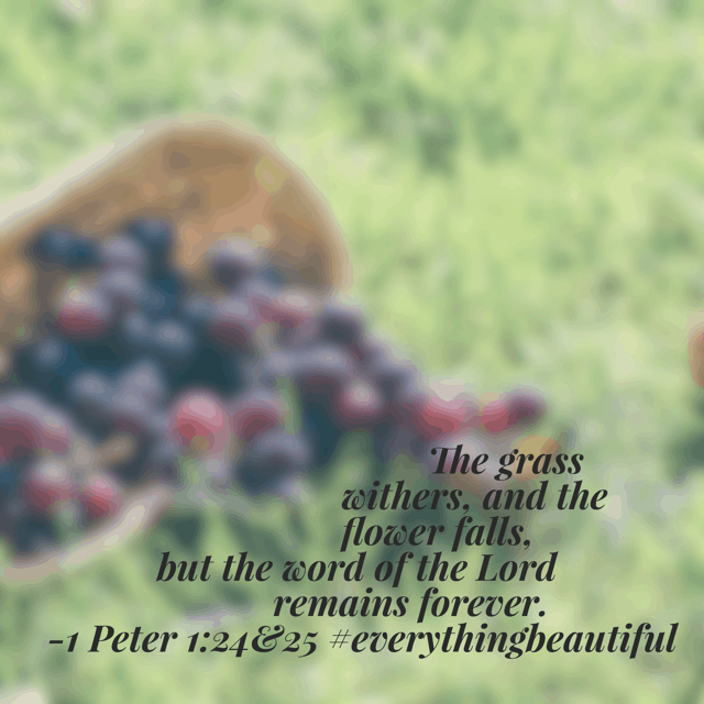 I'm always intrigued when the Old Testament is reiterated in the New Testament, as is the case today in our Bible reading plan. Place today's hope where it will last beyond tomorrow. Then do it again. Have a terrific Tuesday with eyes open for #everythingbeautiful ! #biblereading #biblereadingplan