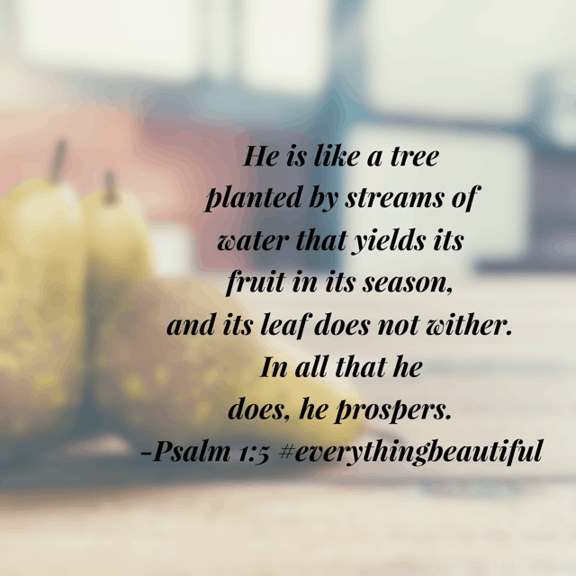 This morning's #biblereadingplan encouraged me to remember that my commitment to being planted in the word of God fosters a wonderful beauty, with fruit in season. Much to meditate on and journal today! Have a terrific Tuesday! #everythingbeautiful #biblereading