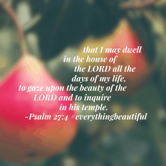 The beauty of the Lord. Wow- David was intentional about his goals! I am pondering what would happen if I followed his pattern. Jesus, reveal your beauty to me today. May the era of my heart be tuned to see all that you have for me. #everythingbeautiful #biblereadingplan #biblereading